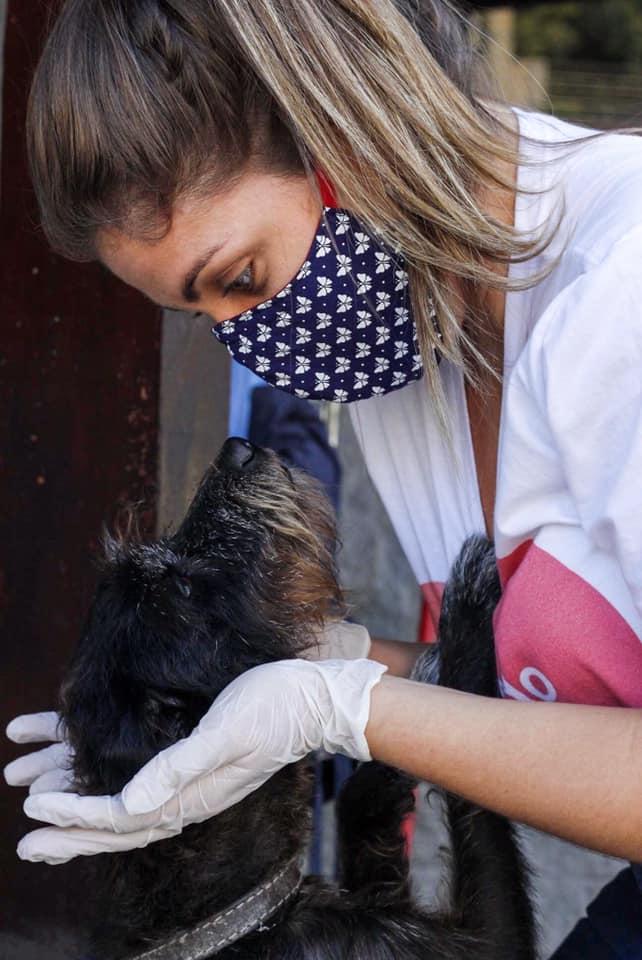 """Ajuda aos animais de rua: """"eu ajudo como dá pets"""" @euajudocomodapets"""